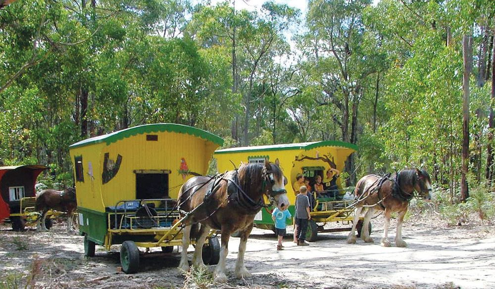 The perfect family holiday, mosey along behind your very own Clydesdale in Bendigo