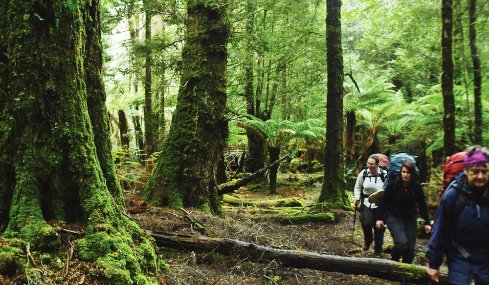 100 Things To Do Before You Die #39 Traipse Through The Tarkine Featured Image
