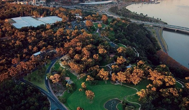 King's Park is the world's largest inner-city park. Image by Tourism WA.