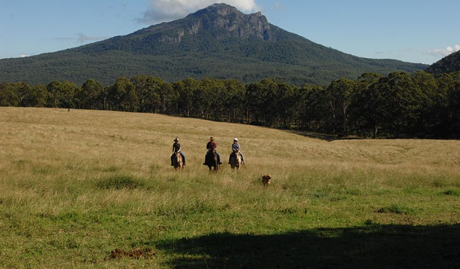 Returning from a day's hard work -- image courtesy of Lillydale Farmstay