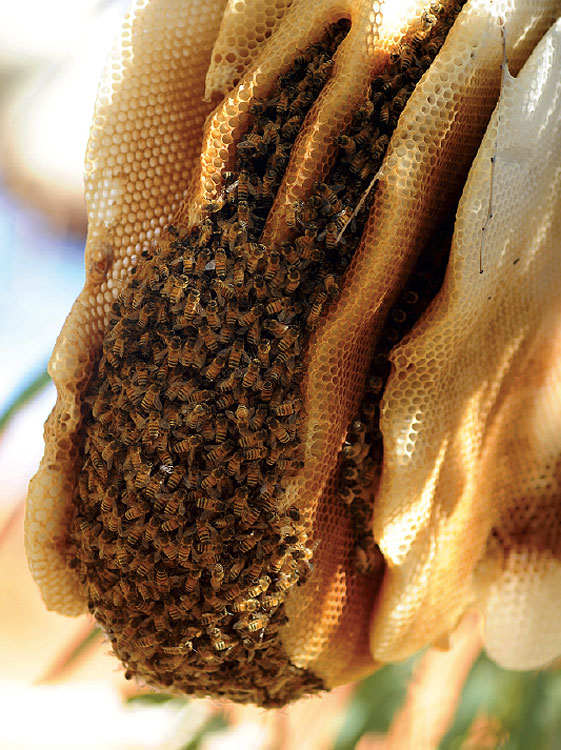 how to build a hive for australian native bees