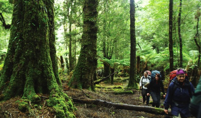 Image courtesy of Tourism Tasmania.