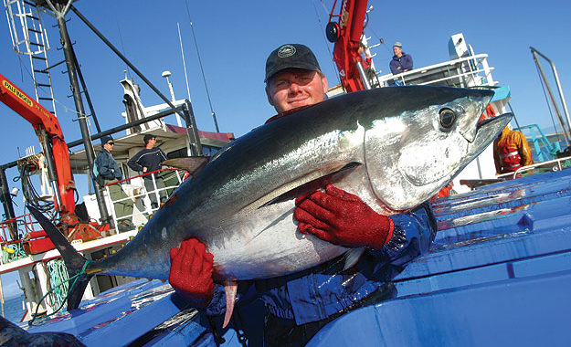 Man with big fish in Port Lincoln Image by Eyre Peninsula Tourism