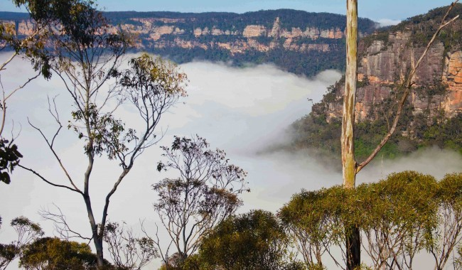 A mist rolls in across the Blue Mountains