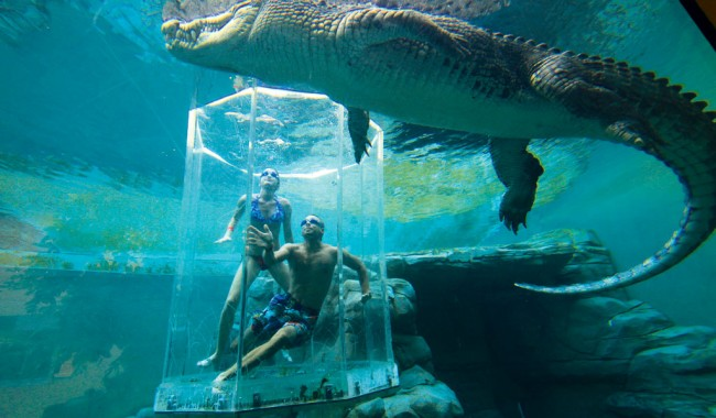 Cage of Death, Crocosaurus Cove