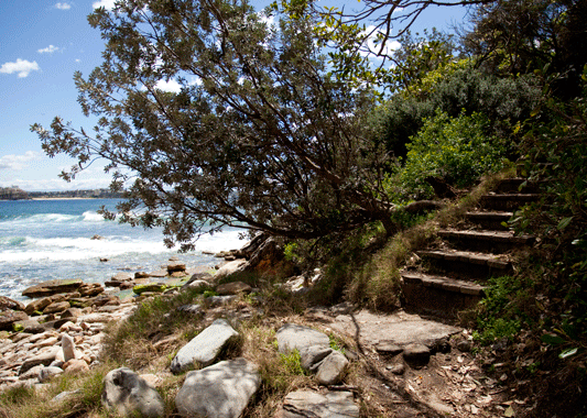 Follow the steps up to the connected Cabbage Tree Bay for a beautiful walk along the coast.