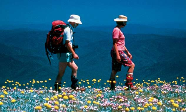 Auswalk's bushflower experiences in the Alpine region