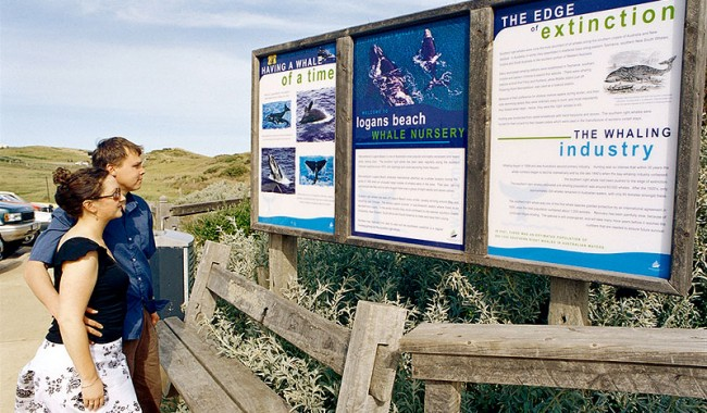 Logan's Beach at Warrnambool is a great place to see whales from July.