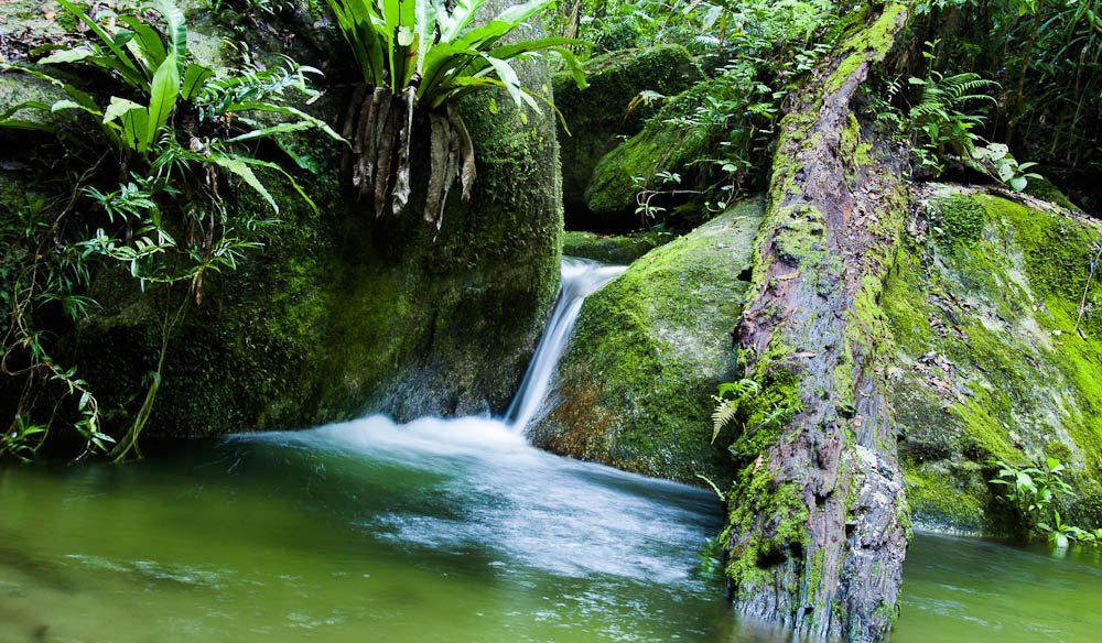 the daintree rain forest Daintree rainforest - #1 attraction in the daintree rainforest welcome to the daintree discovery centre - regular wild cassowary sightings.