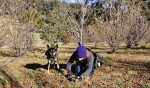 Perigord Truffles of Tasmania have been teaching pound dogs how to locate truffles.
