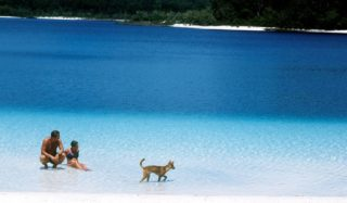 Swimgo or dingo? Lake Mckenzie, Fraser Island (photo: Tourism Australia).