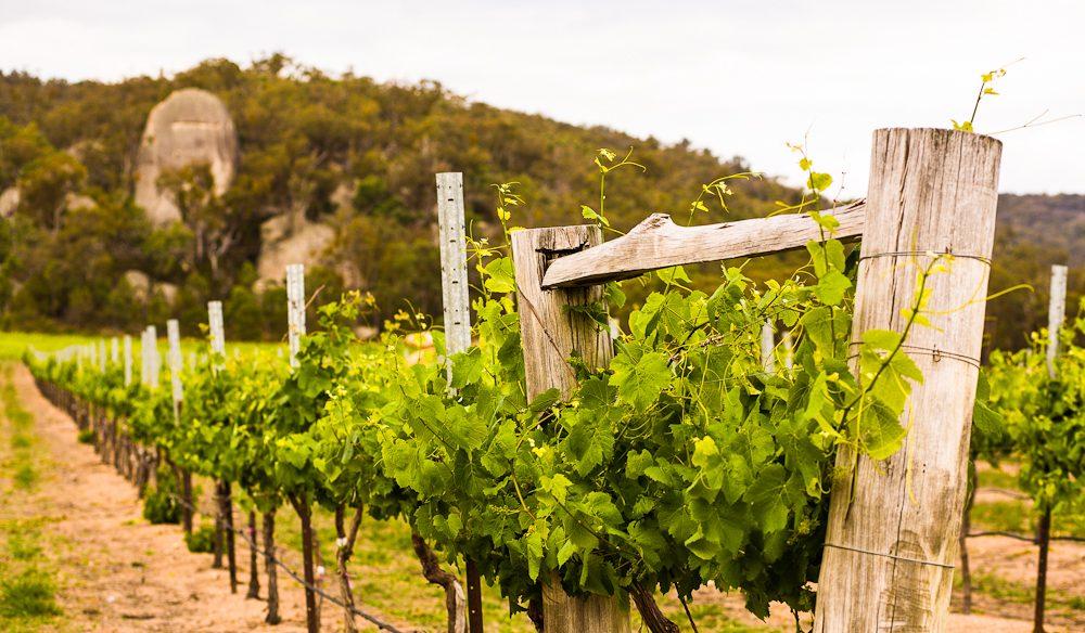 Granite Belt wine Queensland