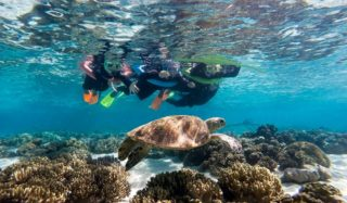 Ocean safari turtle Barrier Reef snorkelling