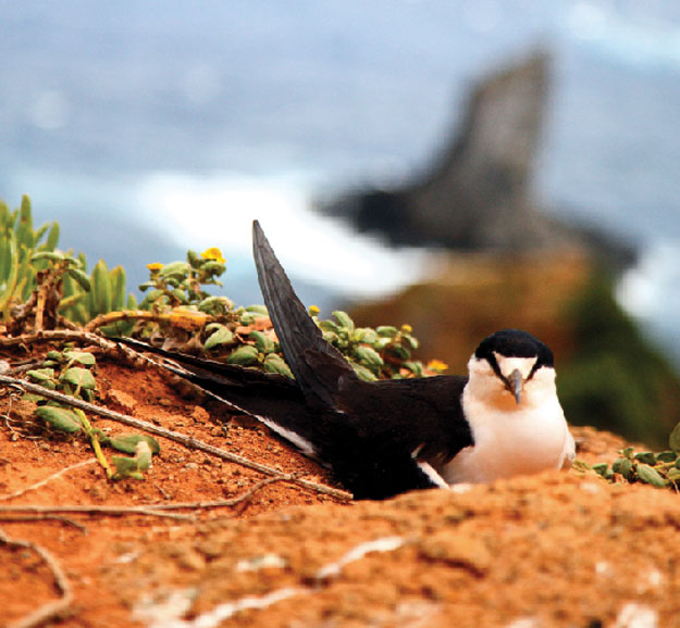 Burnt Pine Norfolk Island  City new picture : ... In Australia #17 Burnt Pine, Norfolk Island | Australian Traveller