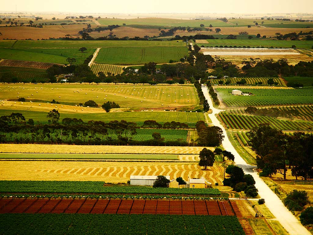 Barossa Valley Australia  City pictures : South Australia 2011 Regional Food Report | Australian Traveller